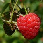 Raspberry Ketones - A Good Aroma Enhancer