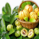 What You Did Not Know About Garcinia Cambogia Extracts