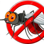 Common Mosquito Borne Diseases And How To Prevent Them?