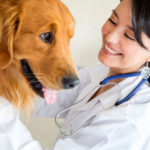 When To Take Your Dog To The Vet
